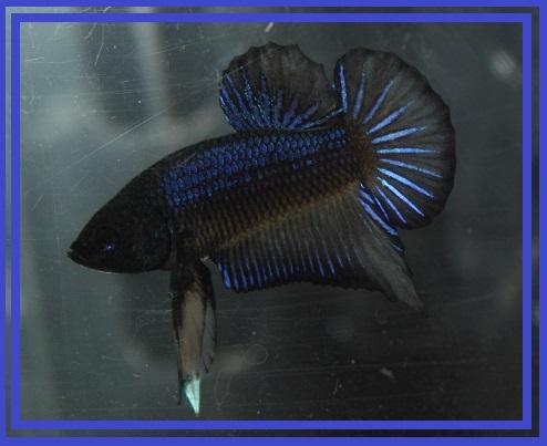 RIP Capitaine Bébé (HM Marble Turquoise) Img_3310