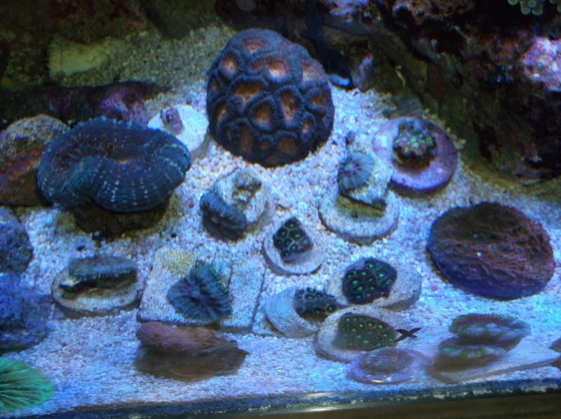 55 Nano Reef Rebuild Dscf0310