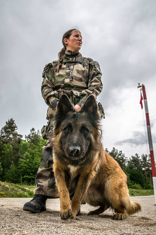 Animaux soldats - Page 5 10177