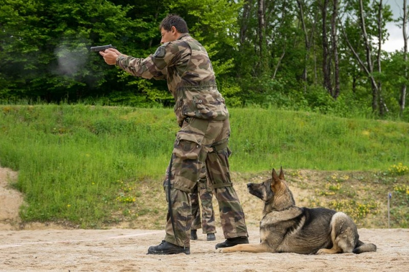 Animaux soldats - Page 5 256