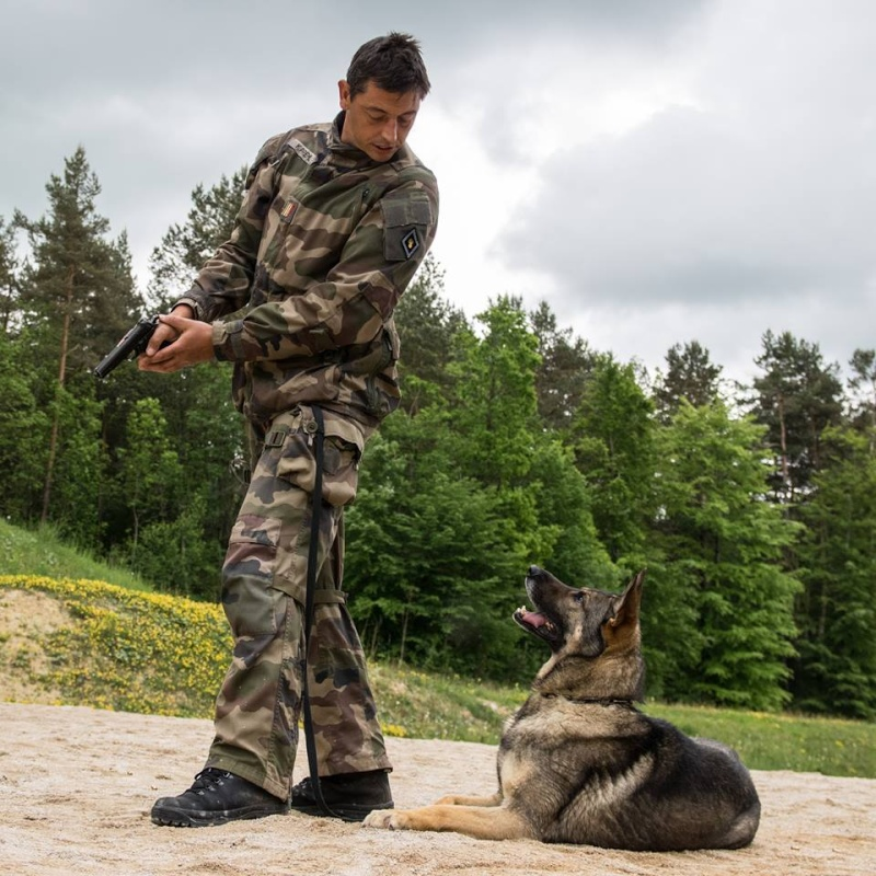 Animaux soldats - Page 5 436