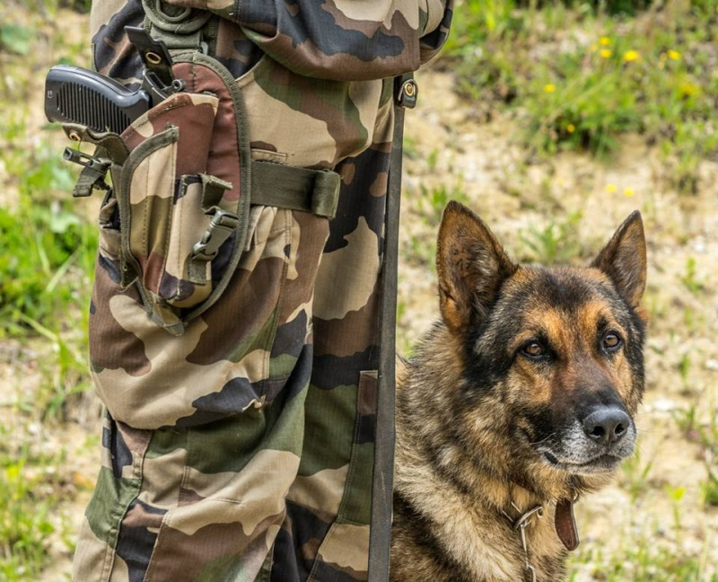 Animaux soldats - Page 5 6196