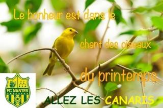30ème JOURNEE de L1 . Sam. 21 mars 201520:00Stade Rennais-  FC Nantes Printe11