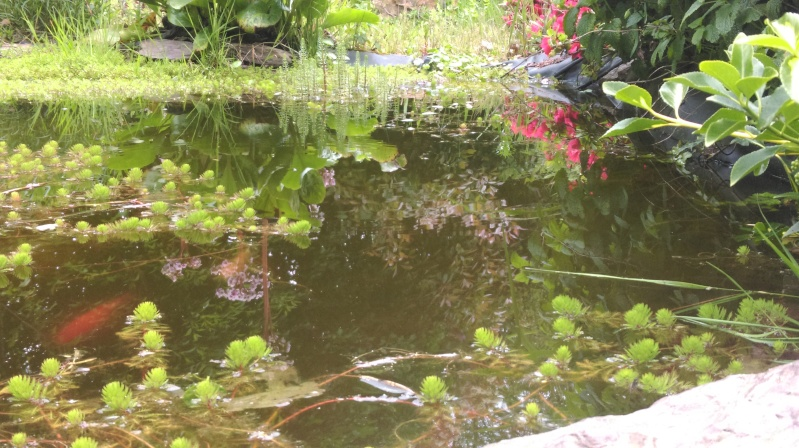 mon bassin de 1000 l - Page 3 Imag0221
