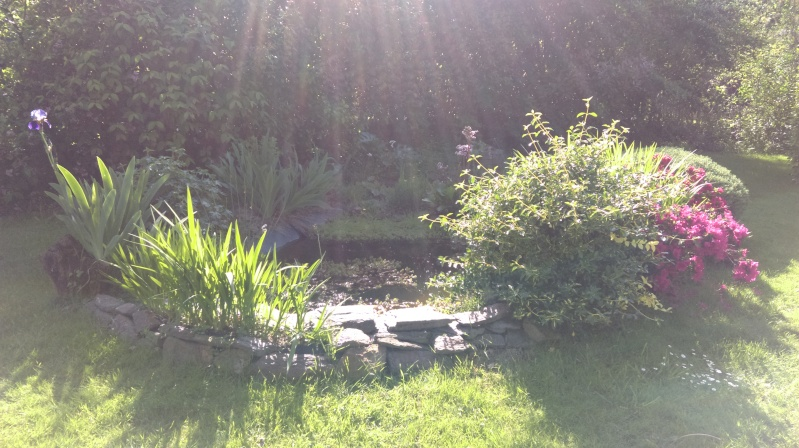 mon bassin de 1000 l - Page 3 Imag0225