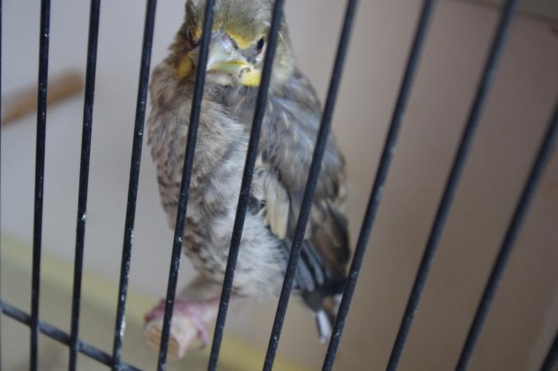 bébé oiseaux Imgp6211