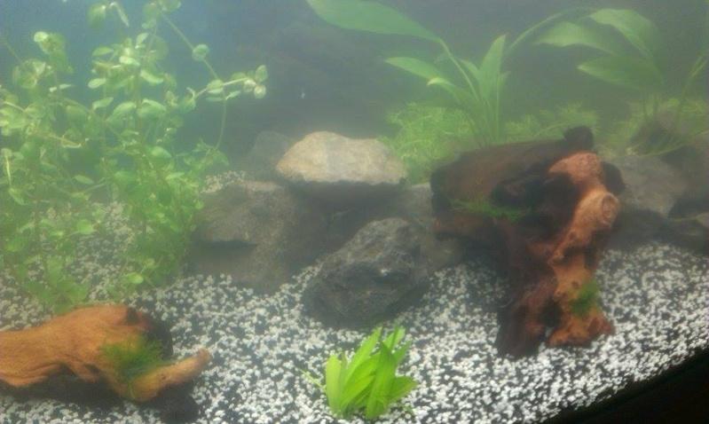 Aqua 180L  [Plantation + mise à l'eau Photos P3] - Page 2 11258510