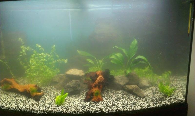 Aqua 180L  [Plantation + mise à l'eau Photos P3] - Page 2 11258910