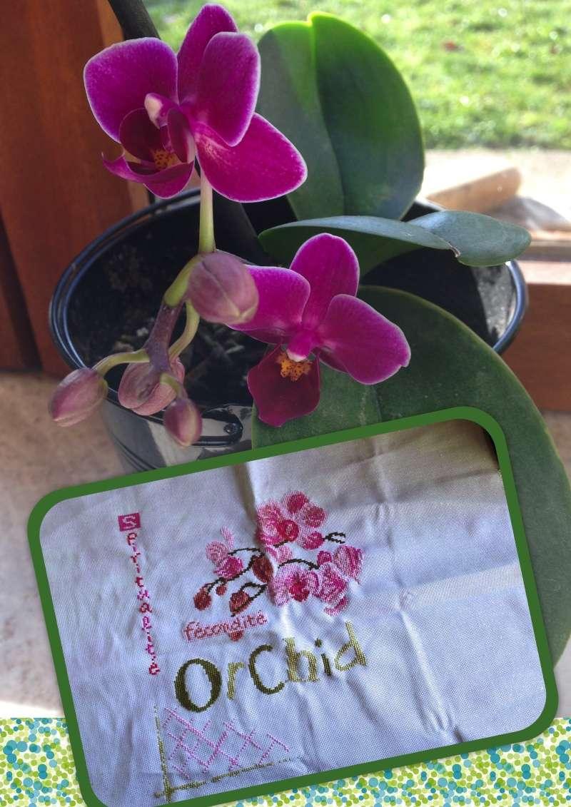 SAL Lilipoint Orchidée - FINI - Page 24 Ytape_10