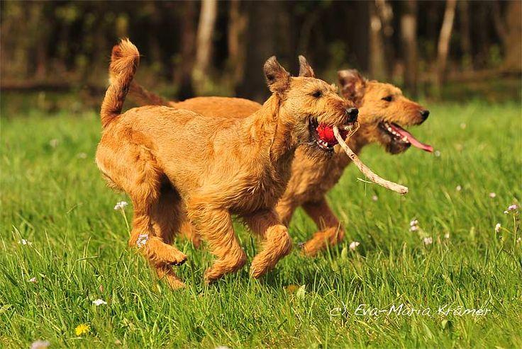 Choisir un chien à adopter en refuge - Page 2 C8295410