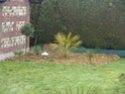 Mon (futur) nouveau jardin 107_3010