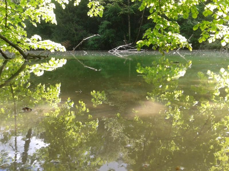 Bras mort sauvage d'une rivière 2014-011