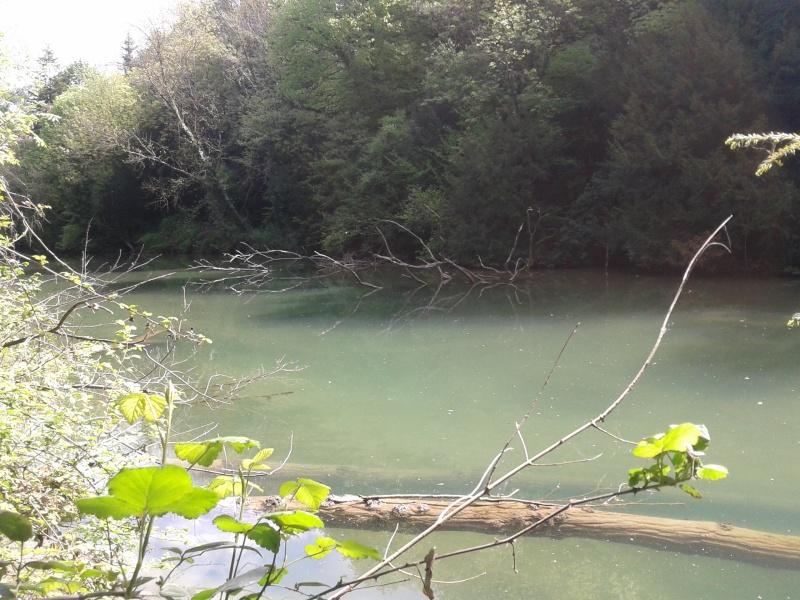 Bras mort sauvage d'une rivière 2014-012