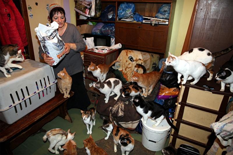 Parrainage des chats de Mme Angela Chats_10
