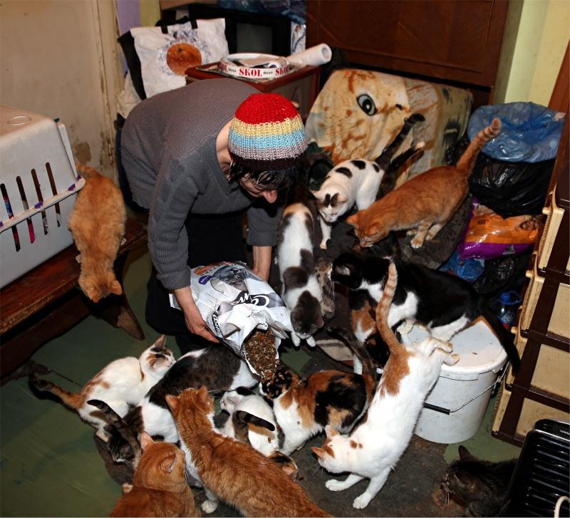 Parrainage des chats de Mme Angela Chats_11