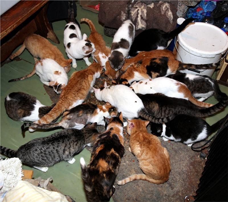 Parrainage des chats de Mme Angela Chats_12