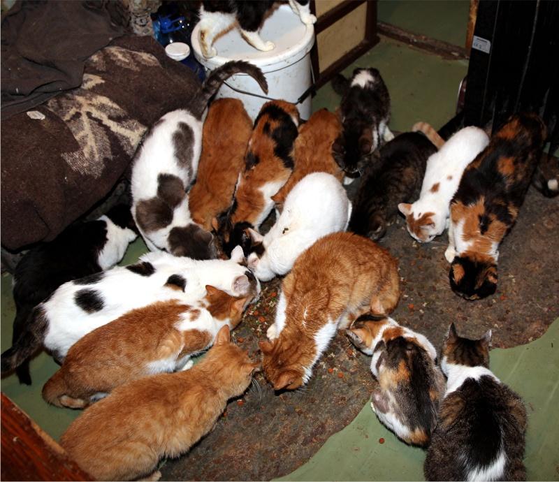 Parrainage des chats de Mme Angela Chats_14