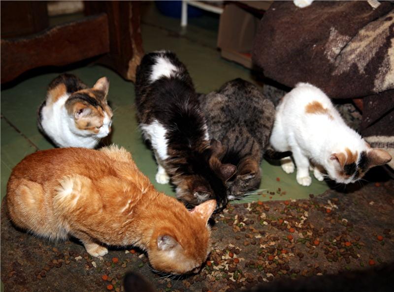 Parrainage des chats de Mme Angela Chats_15