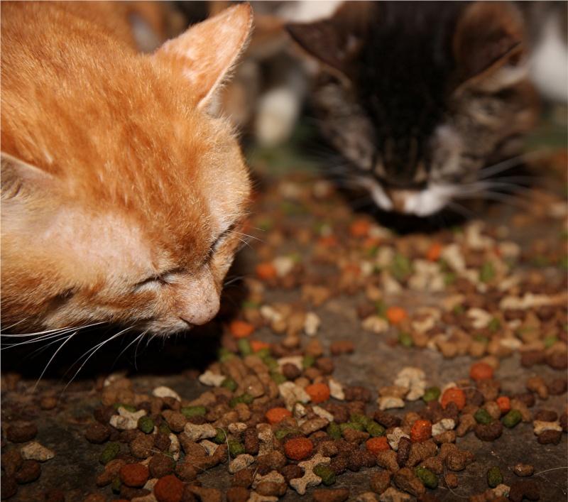 Parrainage des chats de Mme Angela Chats_16