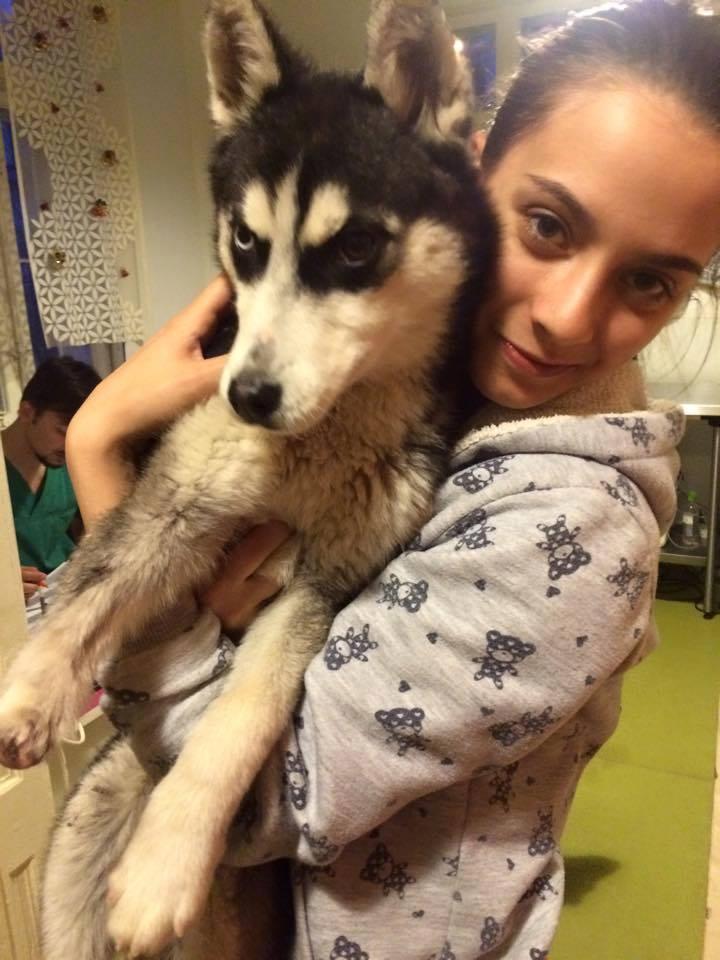 Kaya Husky femelle de 7 mois URGENCE patte coupée, en fourrière ROUMANIE 11086010