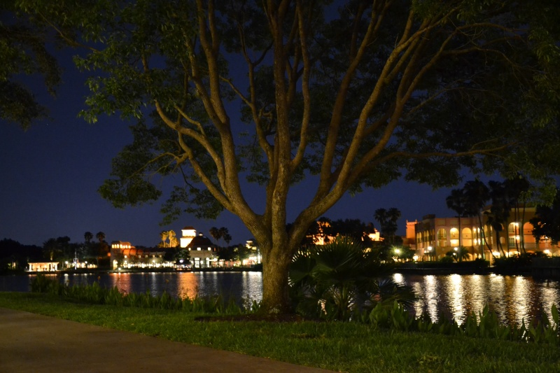 Disneymoon : Walt disney world & Disney cruise line mai 2015  Dsc_0011