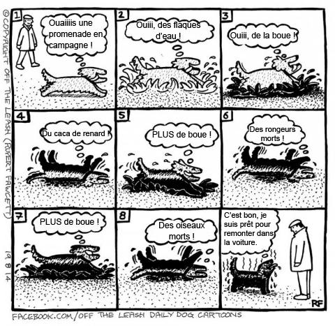 Pensées canines humoristiques Dessin10