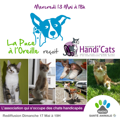 Emission Radio Santé Animale entièrement consacrée à Handi'cats (05/15) La-puc10