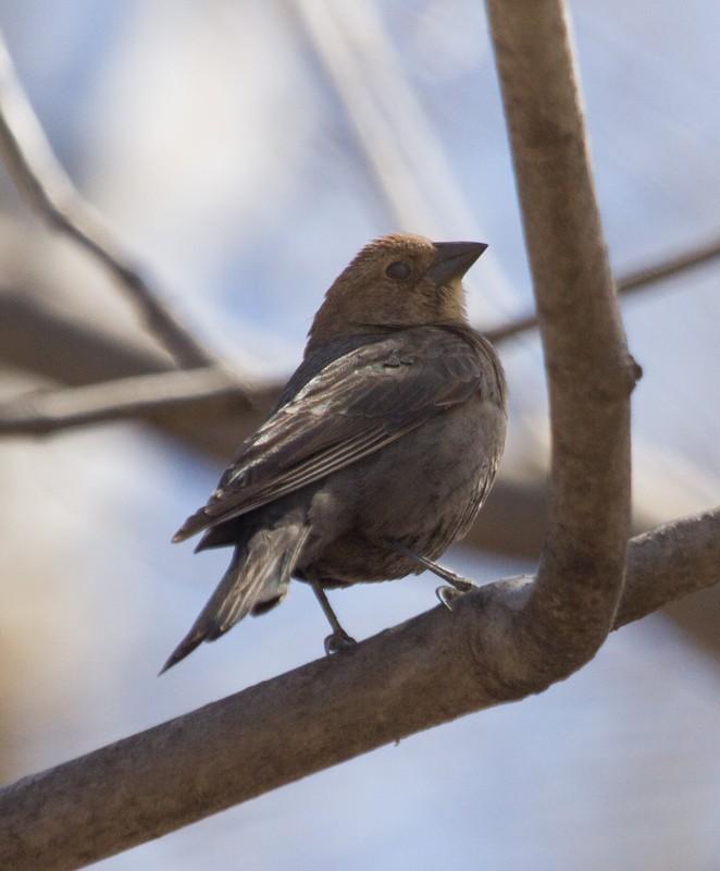 oiseau à identifier s.v.p. Quoi10