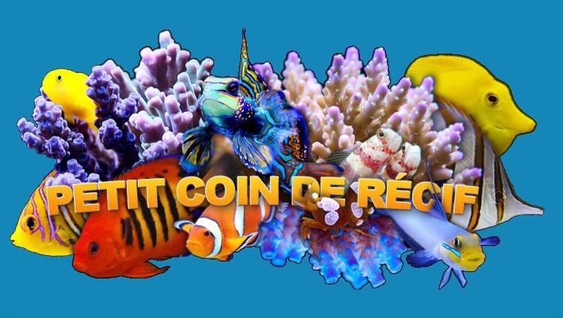 Petit Coin de Récif