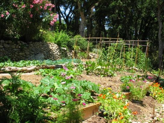 J'aime les jardins - Page 2 Potage10
