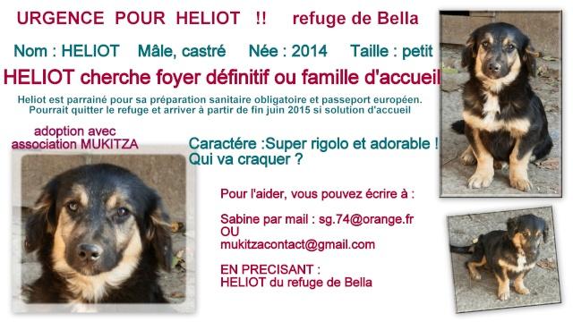 HELIOT, M-X, tout petit et mimi (BELLA) PARRAINE - Pris en charge Association PAS SI BETES - Page 3 Fiche_14