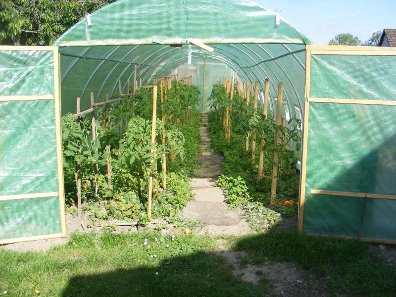 mon jardin Dscf2916