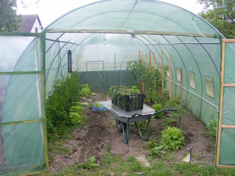 mon jardin Dscf2924