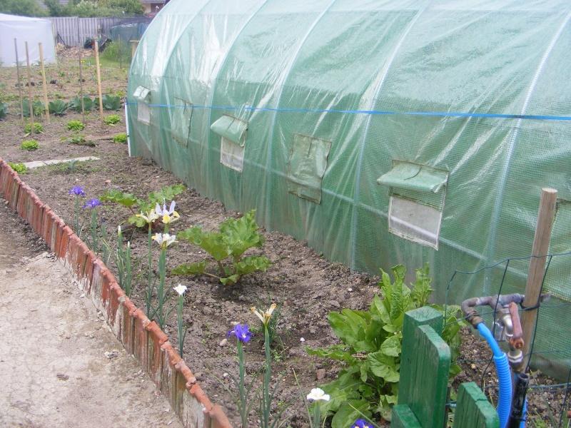 mon jardin Dscf2925