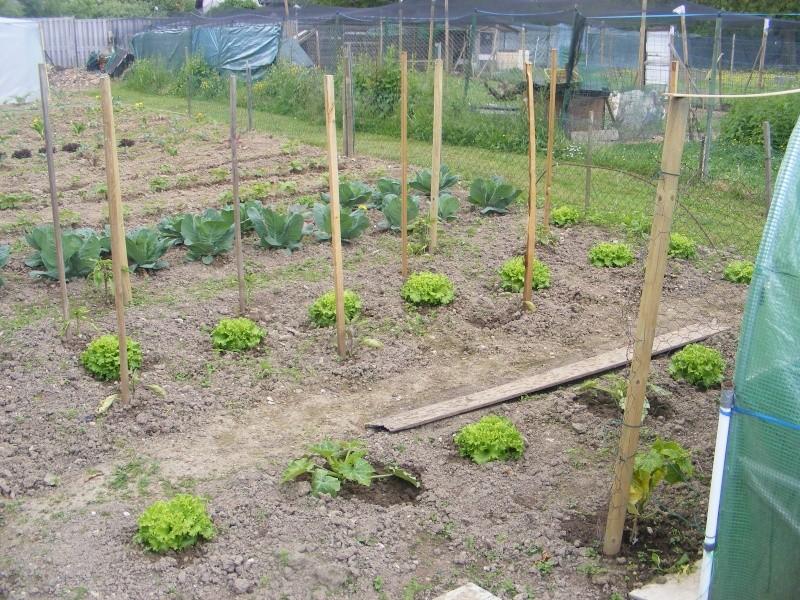 mon jardin Dscf2927