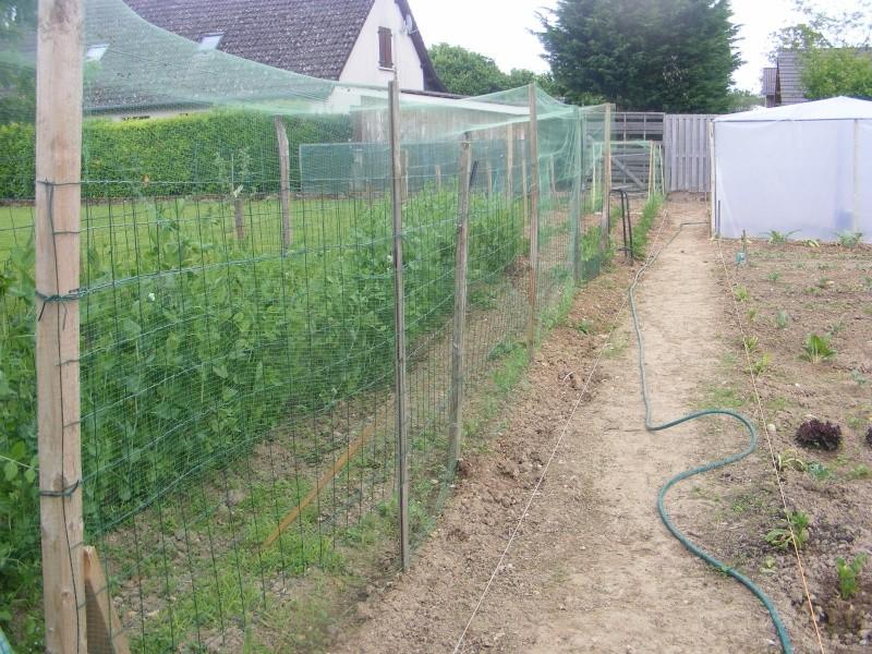 mon jardin Dscf2928