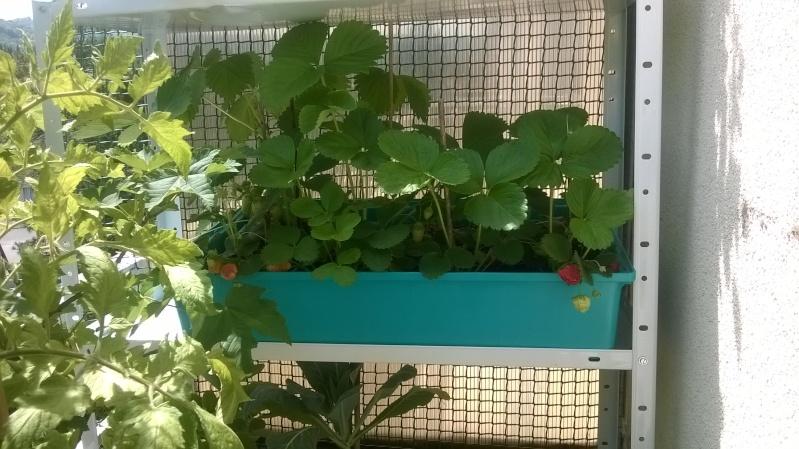 mon jardin Mai_1212