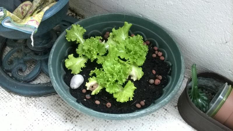 mon jardin Planta12