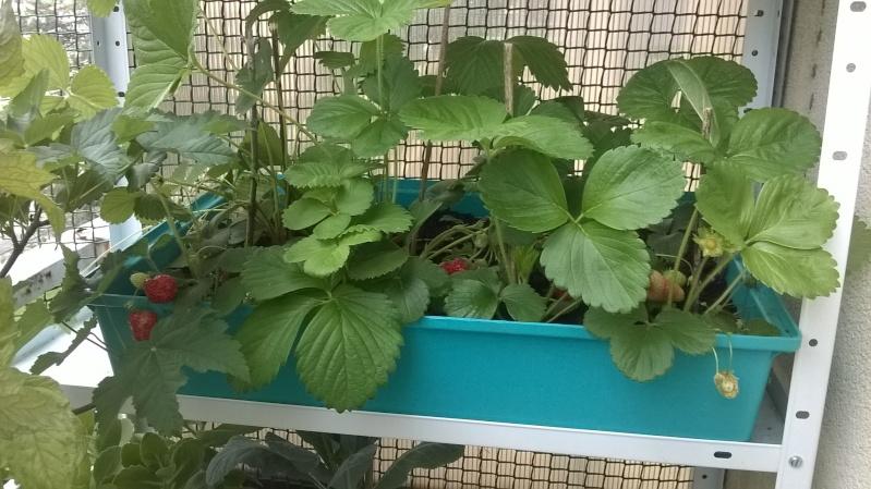 mon jardin Planta16