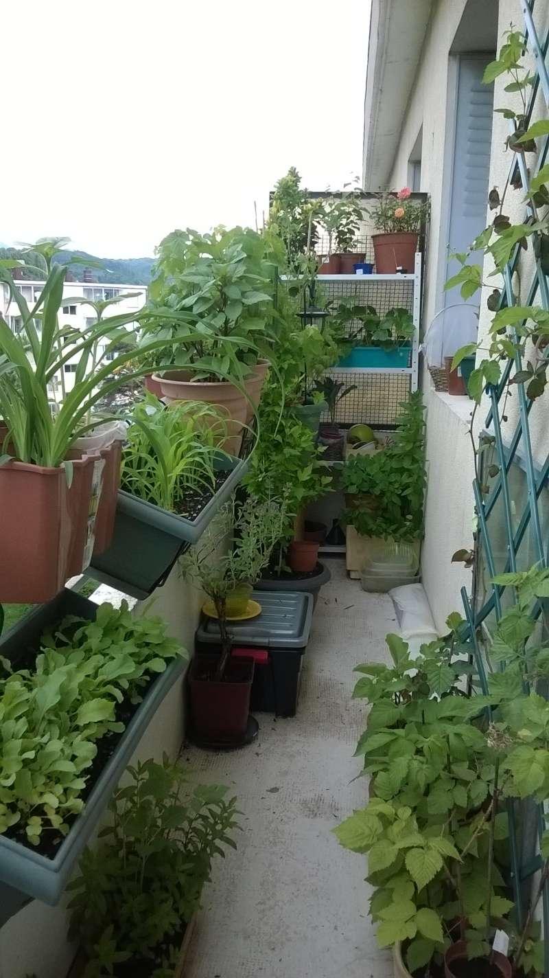 mon jardin Planta17