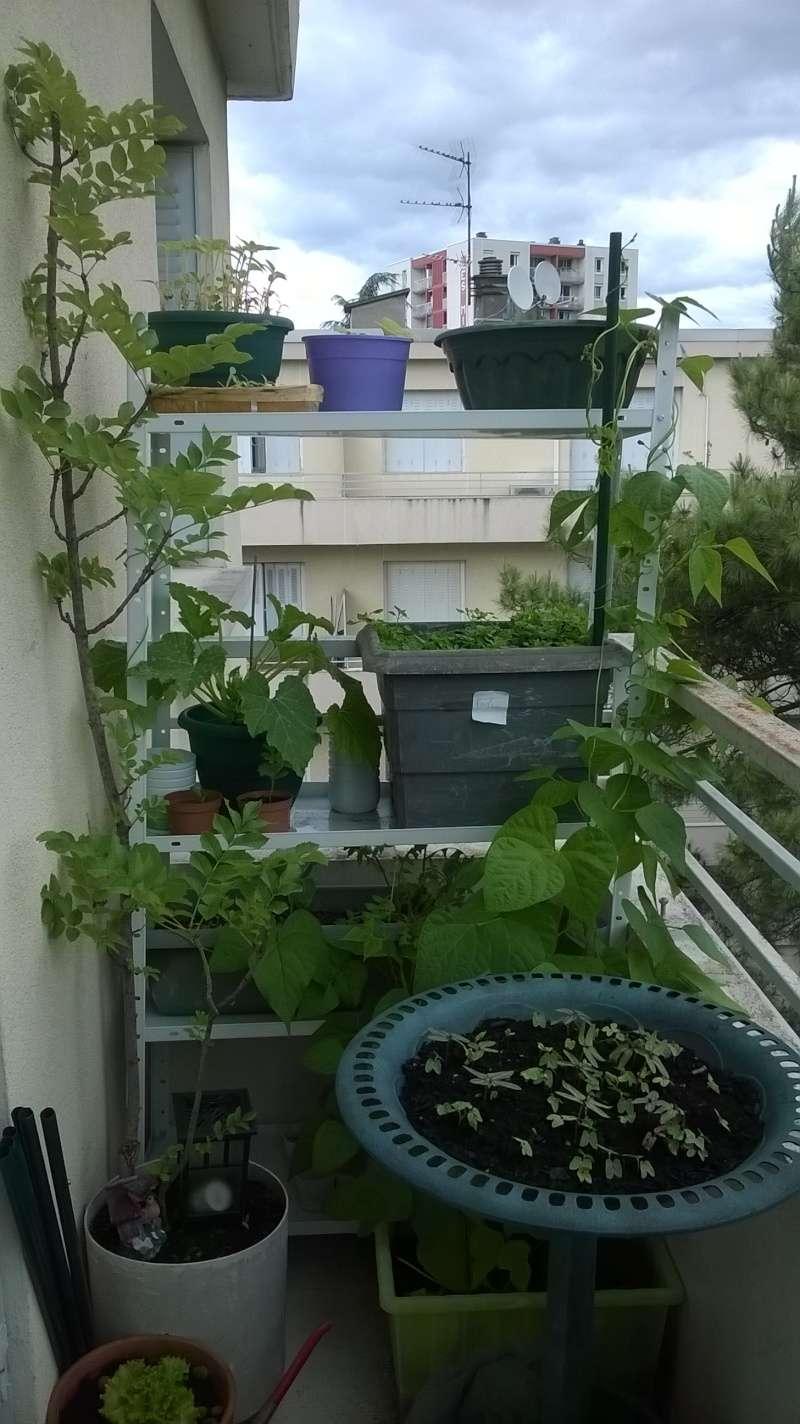 mon jardin Planta18