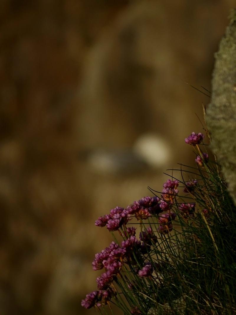 Mouettes tridactyles Dsc00011