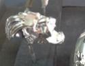 Mascotte SVANO  201 premier modèle et cygne rosalie - Page 3 Lion_f10