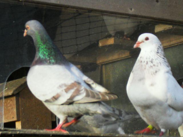 Pigeonnier Sdc11710
