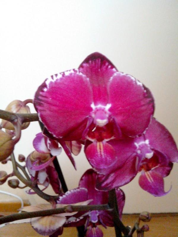 Dates des expos d'orchidées en 2015 - Page 4 Img_2017