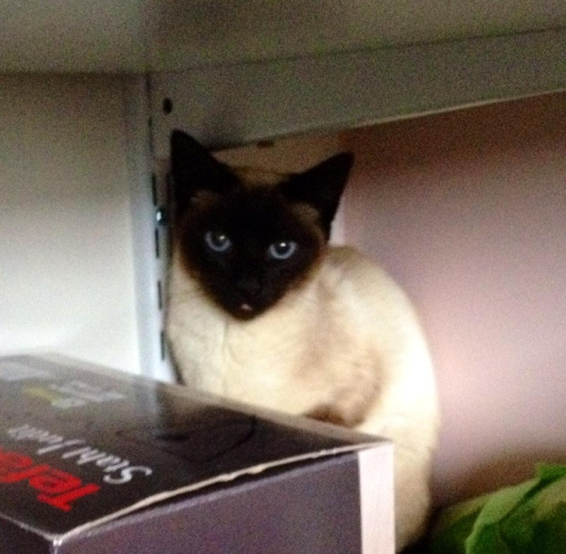 Photos des chats sauvés, avant/après - Page 8 10403410