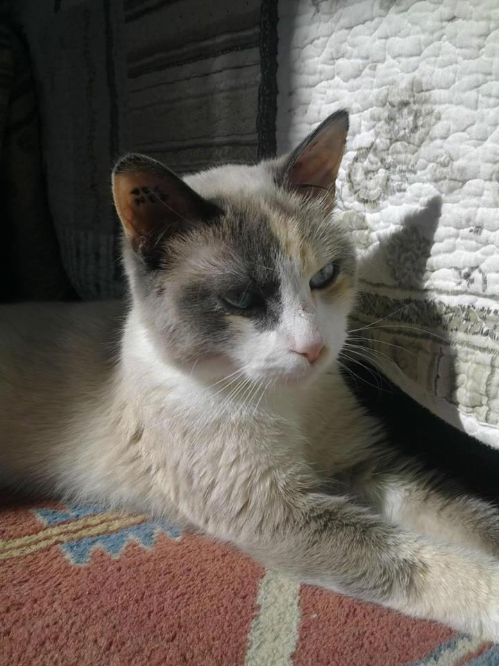 Les chats de Jessica 13789_10