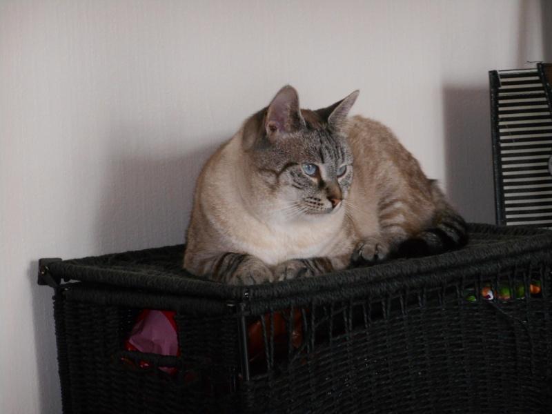 Photos des chats sauvés, avant/après - Page 8 Dscn0311