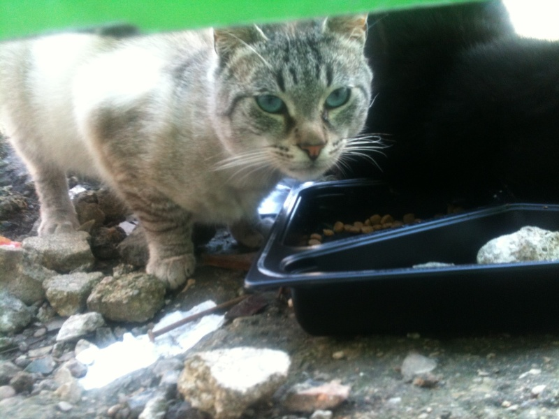 Photos des chats sauvés, avant/après - Page 8 Img_1410
