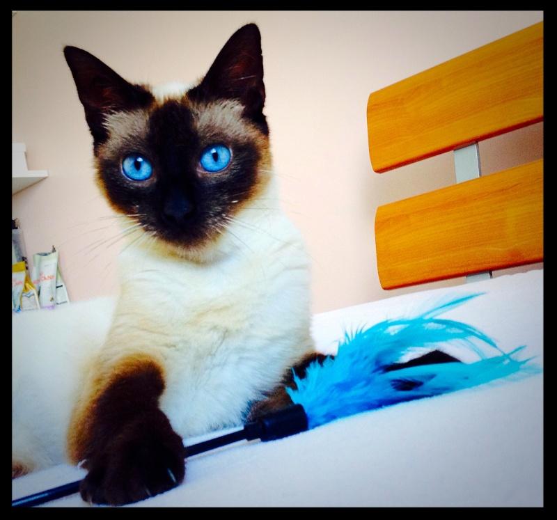 Photos des chats sauvés, avant/après - Page 8 Img_2727